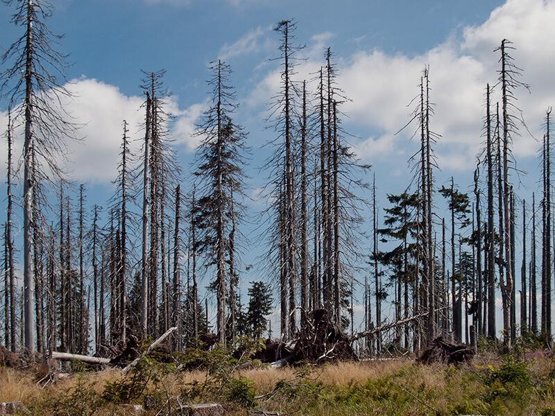 Dopady změny klimatu