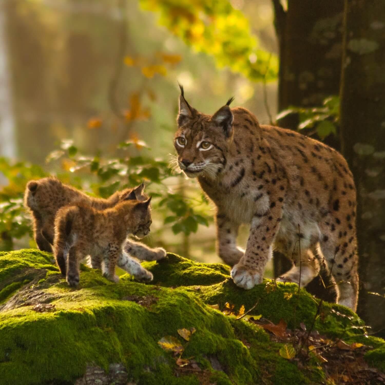 Postav se za přírodu a zvířata
