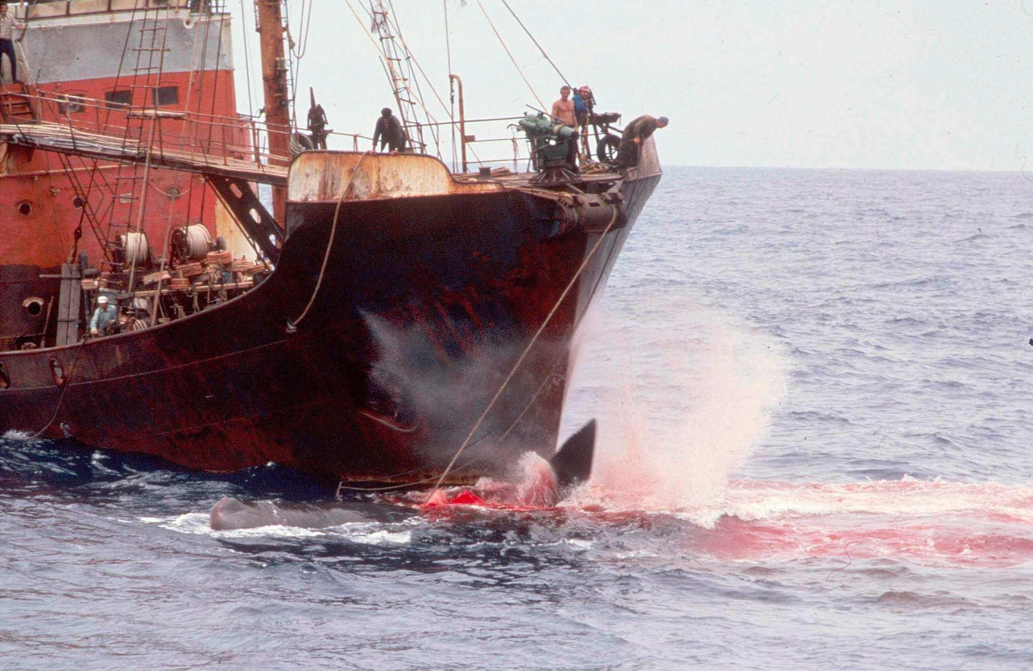 1982 Moratorium na lov velryb